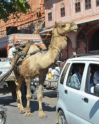 Camel Photograph - Camel In The Road - India by Kim Bemis