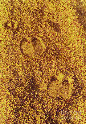 Photograph - Camel Prints In The Sand by Elizabeth Hoskinson