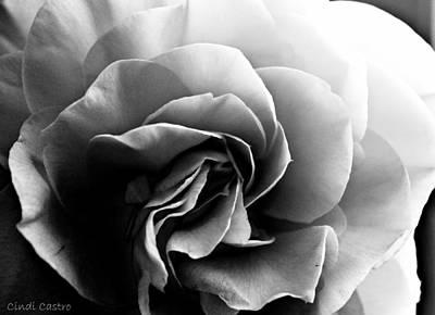 Photograph - Camellia 4 by Cindi Castro