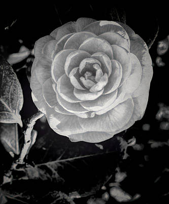 Photograph - Camellia 6 Bw Hdr Art by Lesa Fine