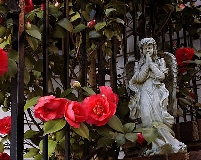 Photograph - Camellia And Angel  by Robert Culver