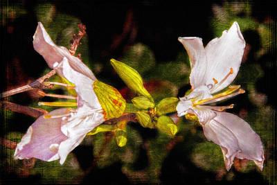 Photograph - Camellia Blossom by Hanny Heim