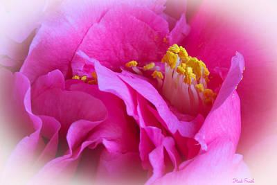 Camellia Photograph - Camellia by Heidi Smith