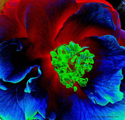Photograph - Camellia Hot And Cold by Kimmary MacLean