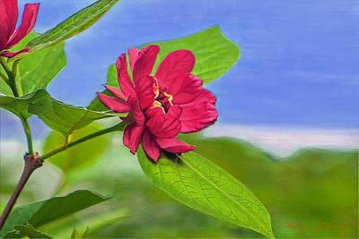 Camellia Art Print by Marion Johnson
