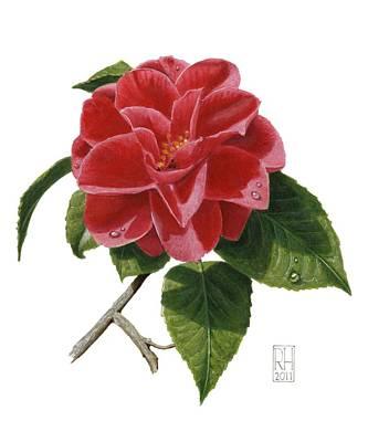 Acrylic Painting - Camellia by Richard Harpum