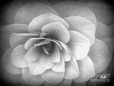 Photograph - Camellia Study by Geri Glavis