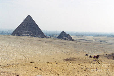 Art Print featuring the photograph Camels At Giza by Cassandra Buckley