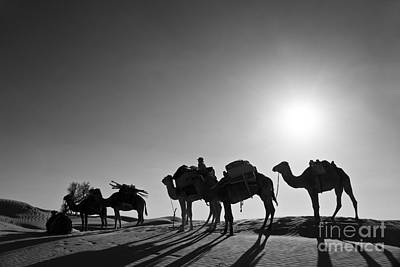 Desert Sunset Photograph - Camels by Delphimages Photo Creations