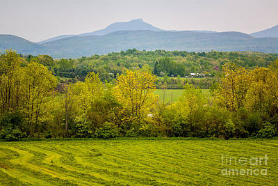 Photograph - Camels Hump Spring by Susan Cole Kelly
