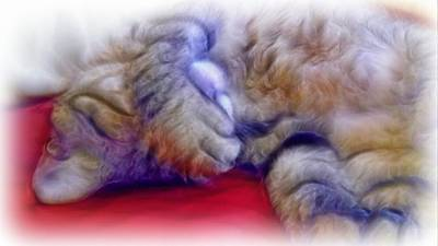 Cat Photograph - Camera Shy Kitty by Lilia D