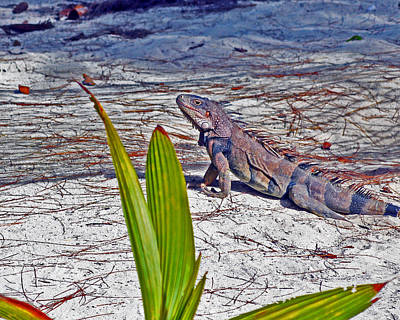 Photograph - Camo Iguana by Bill Swartwout