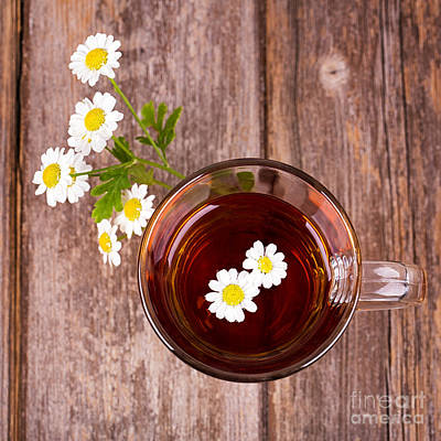 Camomile Tea Art Print by Jane Rix