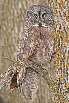 Camouflage-an Owl's Best Friend Art Print by Heather King