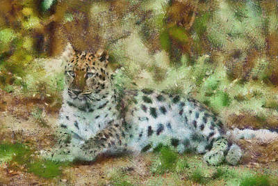 Camouflage Cat Art Print by Trish Tritz