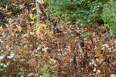 Photograph - Camouflage Deer by Lorna R Mills DBA  Lorna Rogers Photography