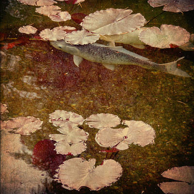Koi Digital Art - Camouflage by Sally Banfill
