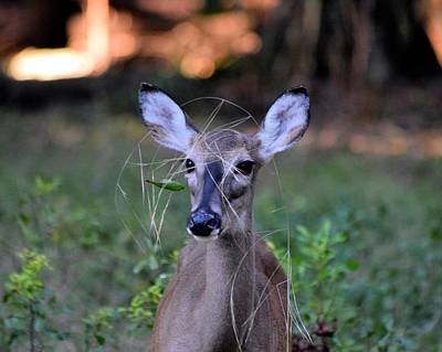 Photograph - Camouflage Wearing Deer by Sheri McLeroy