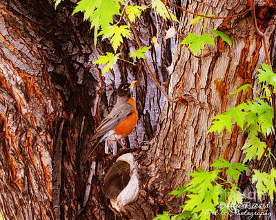 Photograph - Camouflaged  by Bobbee Rickard