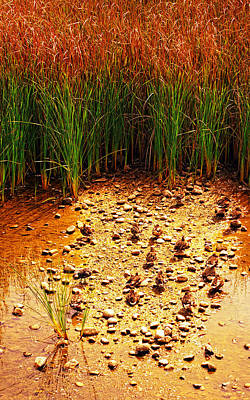 Cal State Photograph - Camouflaged Ducks by Ron Regalado