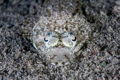 Hiding Photograph - Camouflaged Flathead Fish by Ethan Daniels