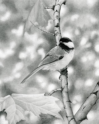 Chickadee Drawing - Camouflaged by Margaret E Dent