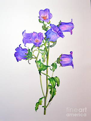 Painting - Campanula by Dion Dior