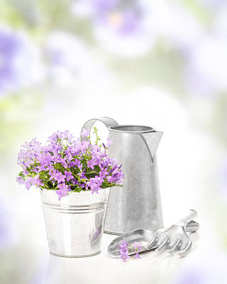 Water Jug Photograph - Campanula Flowers by Amanda Elwell