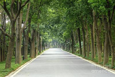 Photograph - Camphor Tree Path by Charline Xia