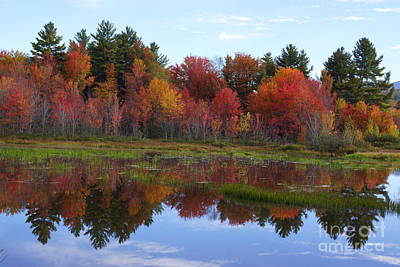 Photograph - Campton Pond by Kerri Mortenson