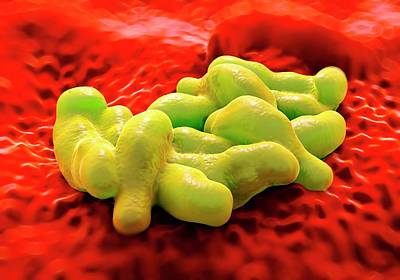Microscopic Photograph - Campylobacter Bacteria by Science Artwork