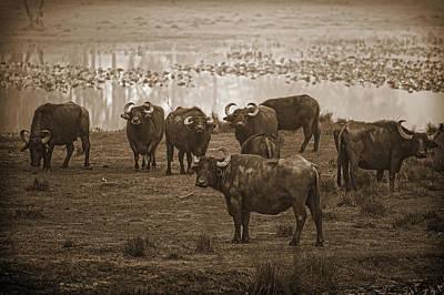 Can Not Roller Skate In A Buffalo Herd Art Print by Frank Feliciano
