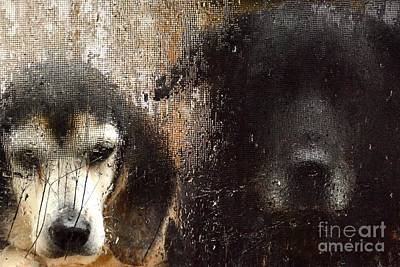 Black Lab Digital Art - Can We Come In by Christy Evers