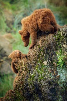 Grizzlies Wall Art - Photograph - Can You Help Me? by Sergio Saavedra Ruiz