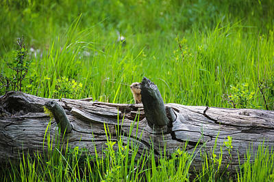 Photograph - Can You See The Squirrel by Christy Patino