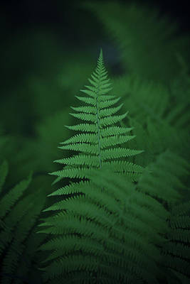 Virgina Photograph - Canaan Fern by Shane Holsclaw