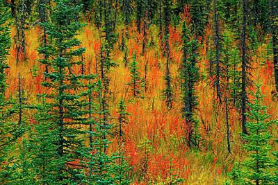 Canada, Alberta Autumn In A Meadow Art Print by Jaynes Gallery