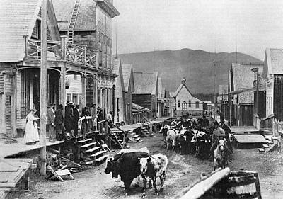 Cattle Drive Photograph - Canada Barkerville by Granger