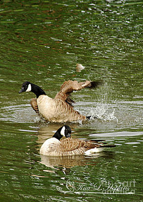 Photograph - Canada Geese 20120515_208b by Tina Hopkins