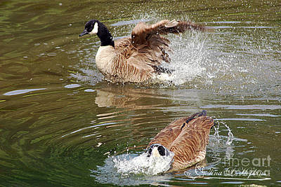 Photograph - Canada Geese 20120515_283a by Tina Hopkins