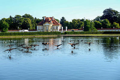 Photograph - Canada Geese At Nymphenburg Palace by Marilyn Burton