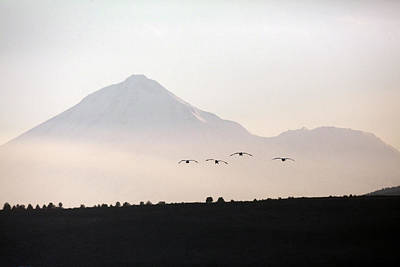 Mt Shasta Photograph - Canada Geese Branta Canadensis Fly by Mike Kane
