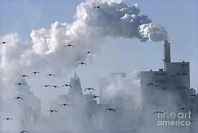 Photograph - Canada Geese Flying Through Polluted Air by Gregory K Scott