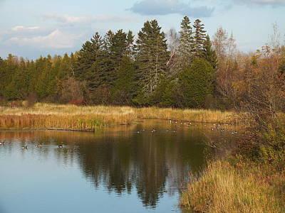 Photograph - Canada Geese In Fall 1 by Gene Cyr