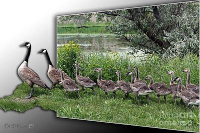 Digital Art - Canada Geese by J McCombie
