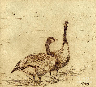 Canada Geese Art Print by Neil Rizos