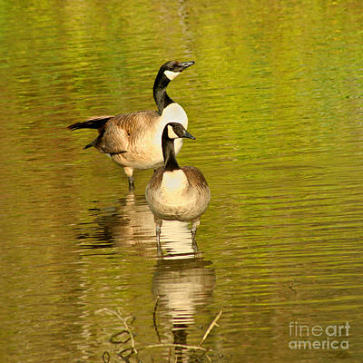 Print featuring the photograph Canada Geese Pair by Bob and Jan Shriner