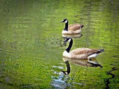 Photograph - Canada Geese Pair by Frank Wilson