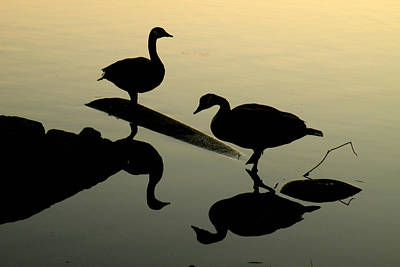 Photograph - Canada Geese Reflections And Silhouettes by Brian Chase