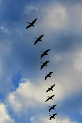 Branta Photograph - Canada Geese Silhouetted Against Sky by Adam Jones